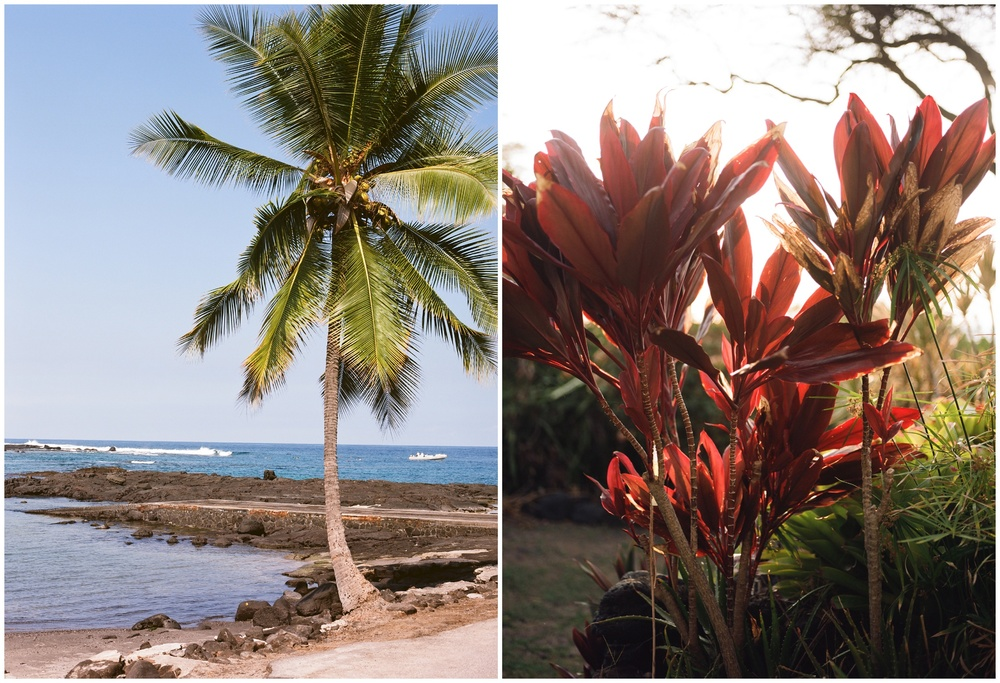A secluded beach and gorgeous plant life in Kona, Hawaii. Film photography by Sonja Salzburg of Sonja K Photography.