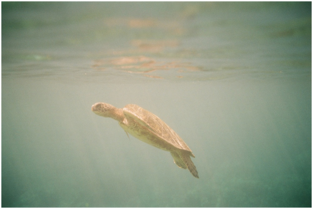 A sea turtle at 2-Step. Film photography by Sonja Salzburg of Sonja K Photography.