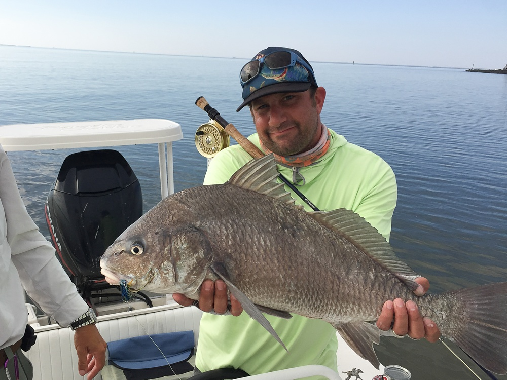 A large black drum caught on fly in the marshes near Port Sulphur, Louisiana.