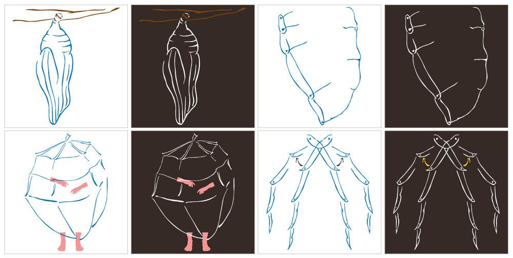 Chrysalis -Development Sketches