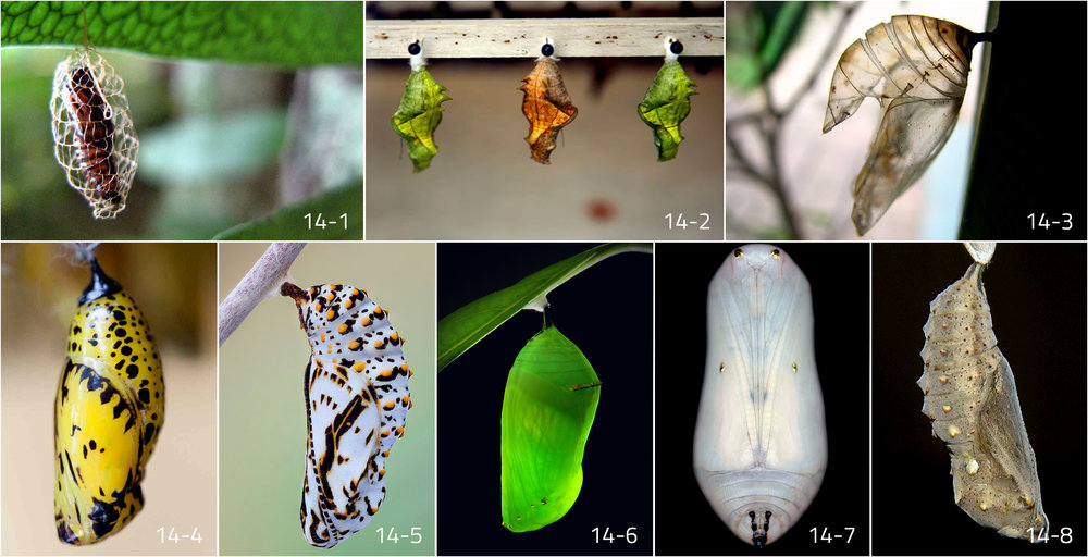 Image References i: Chrysalis - Google Search