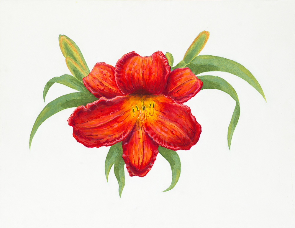 Day Lily High res.JPG