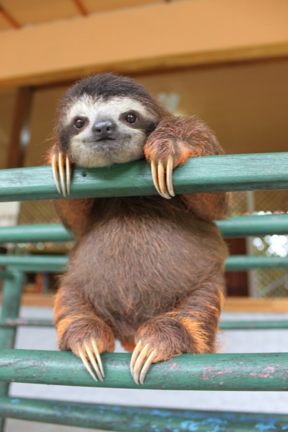 l-the-happiest-baby-sloth.jpg