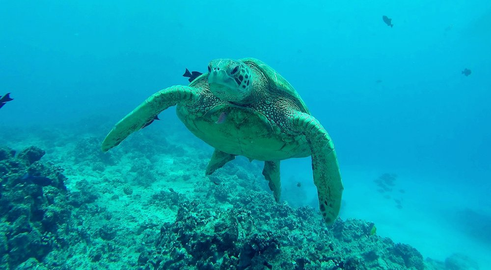 Not my photo, but taken in a spot where I got to swim with two sea turtles
