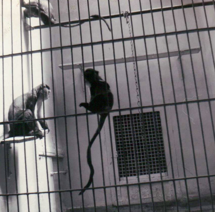 This is what a monkey cage used to look like at the St. Louis Zoo. :(