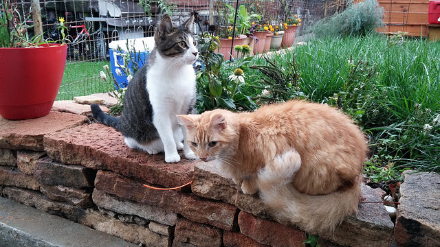 Cats outside on a rainy day