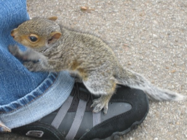 Baby squirrel on my foot in Nashville in 2009