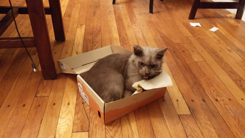 You could call it a cat toy, but it's actually just an empty box on the floor that he's taken over.