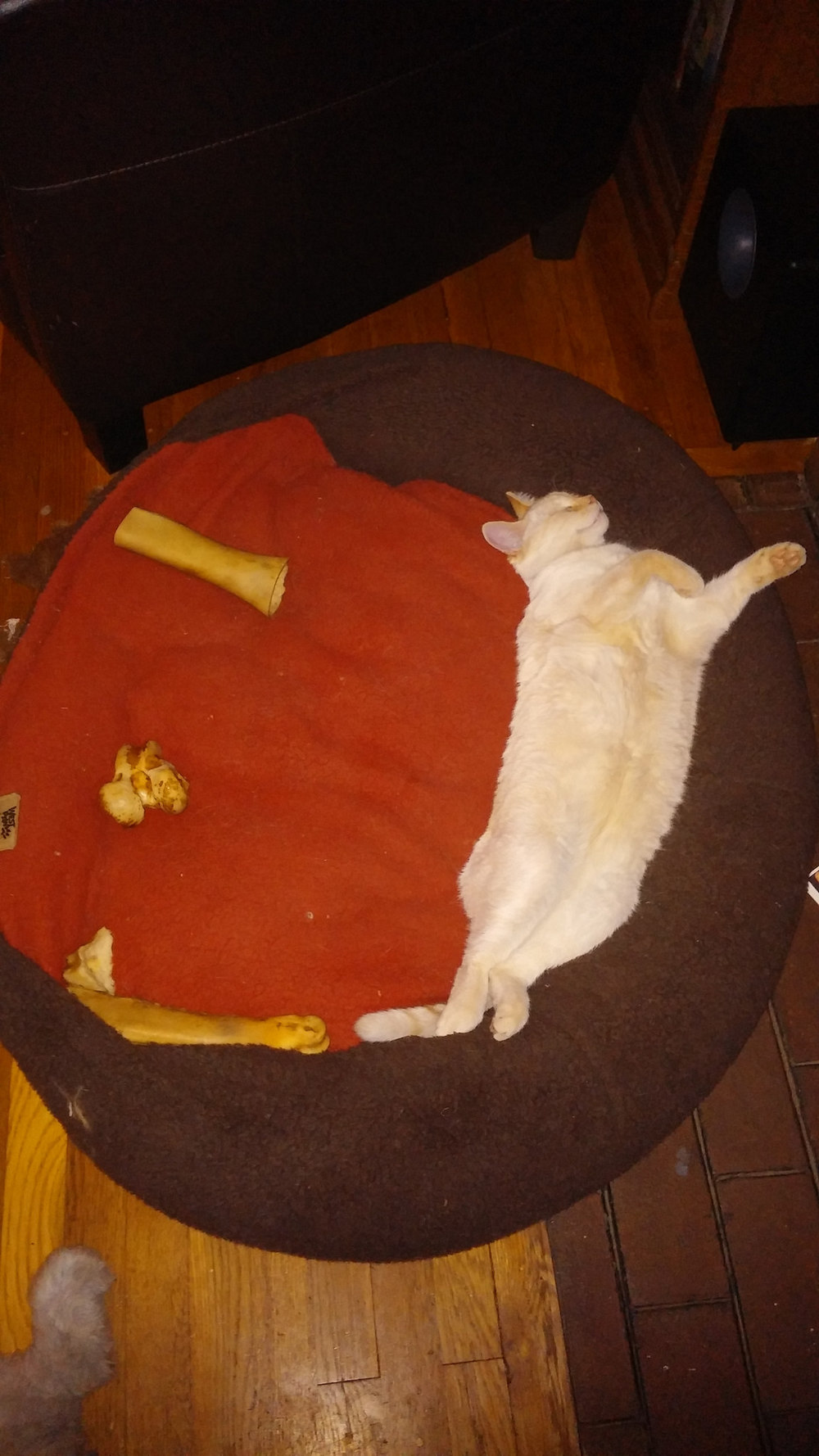 Then I laid down in the dog's bed with all the bones and pretended to be dead. (Cats are weird.)