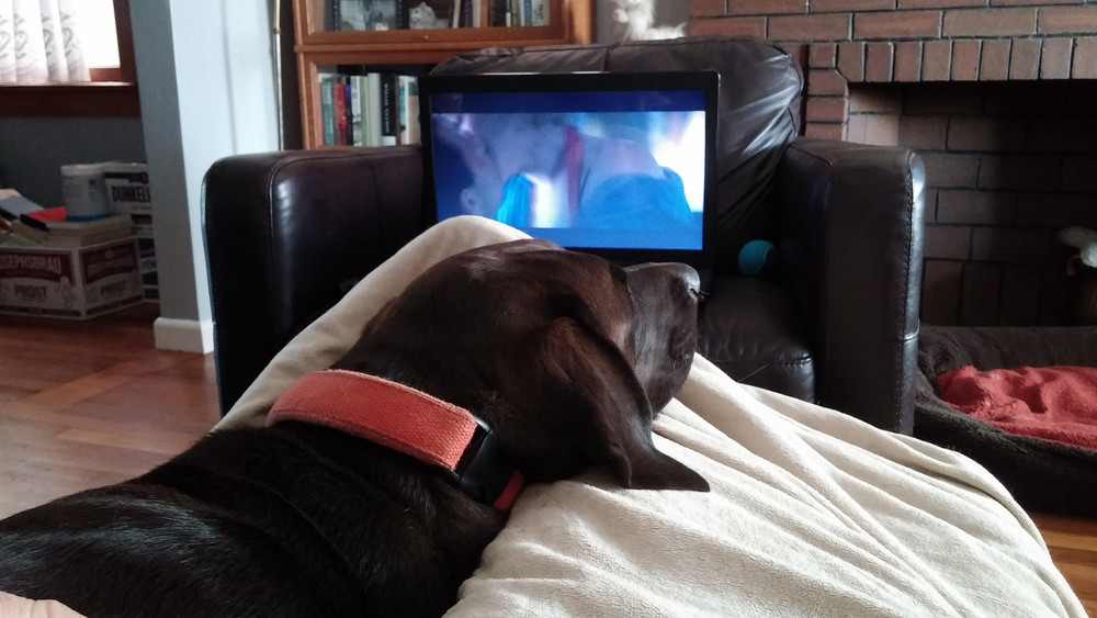 Hazel could have watched True Romance with us, but she slept through the whole thing.