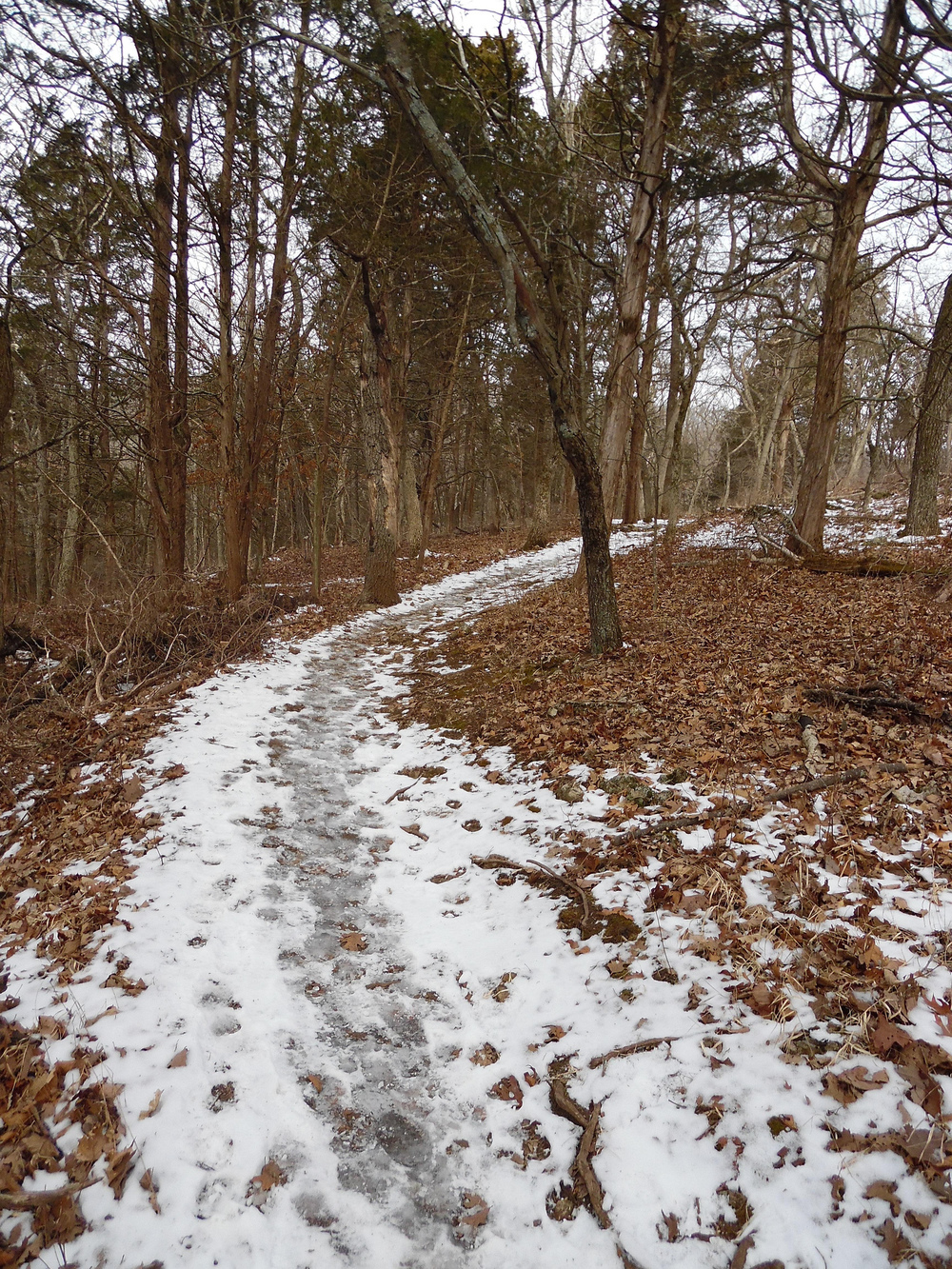 A snowy trail at West Tyson Park.