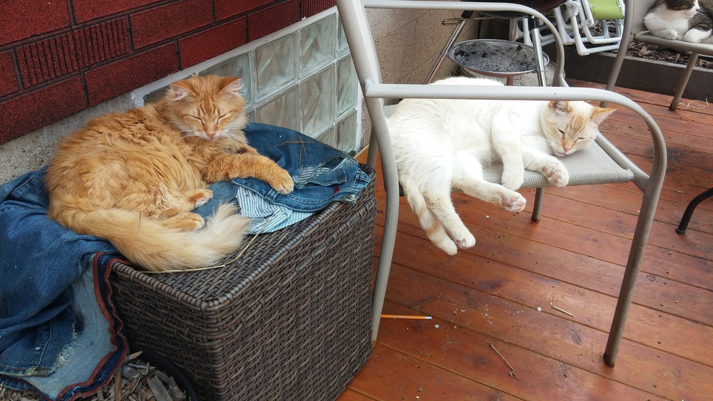 Mellow cats on a warm afternoon.