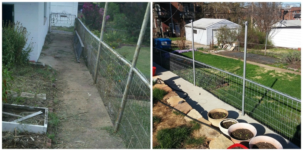 On the left: the fence a couple years ago when we were getting ready to replace the sidewalk. On the right: the fence today, along with the new sidewalk.