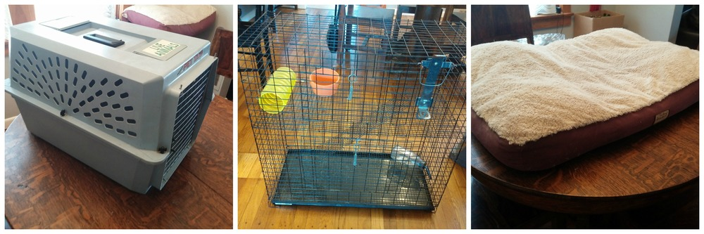 Pet carrier, ferret cage and dog bed. Actually, cats like the dog bed, too, and some crazy cats even like the ferret cage. No cats like the pet carrier.