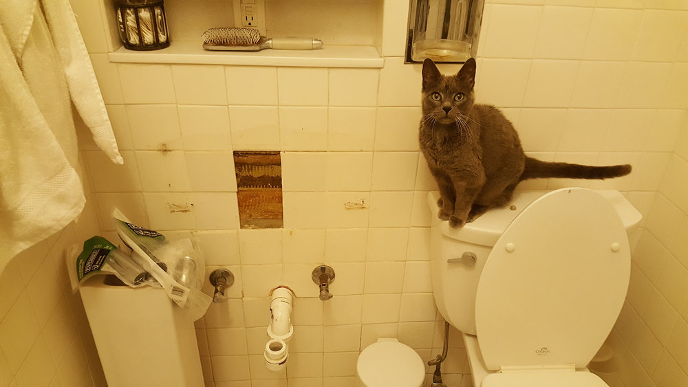 Lulu Was. Not. Happy. about that time when we had to replace the bathroom sink.