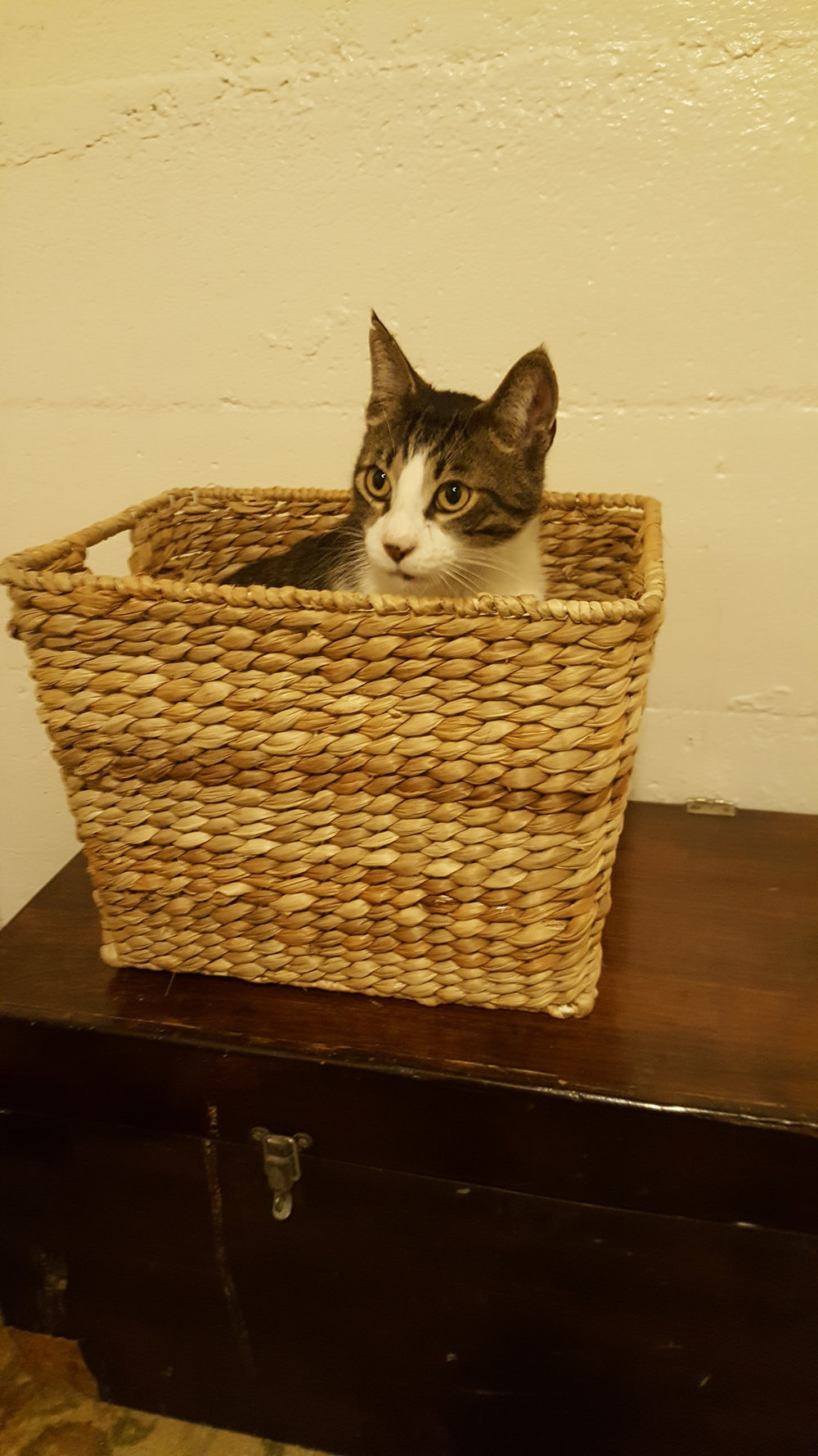 Basket case.