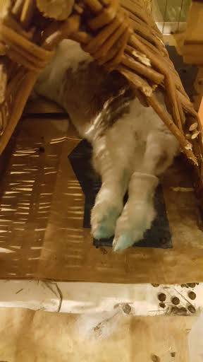 Bonus bunny feet, courtesy of my friend Hilary's bunny Miriam.