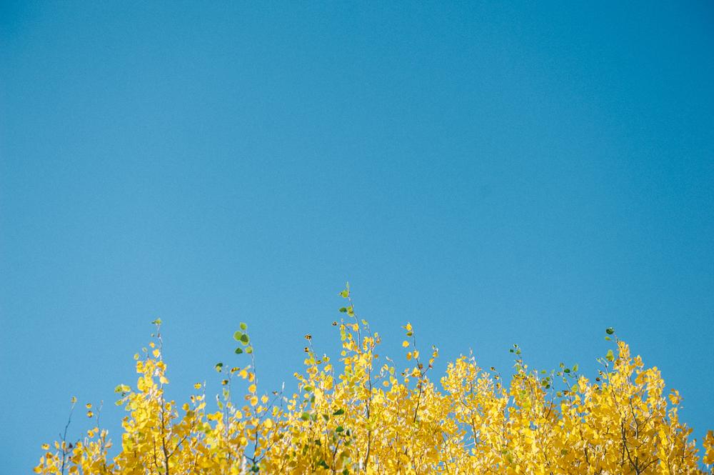 fall-8.jpg