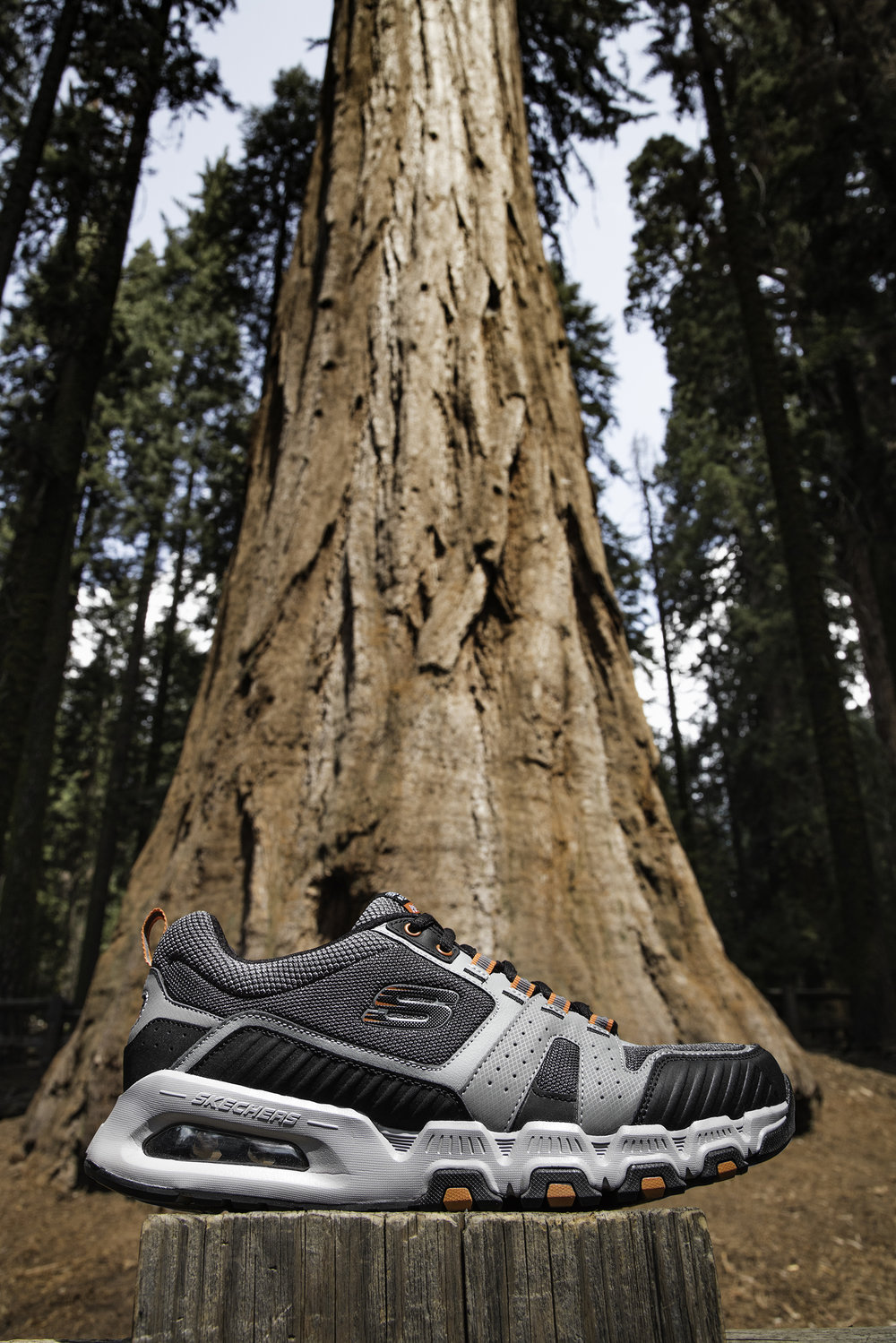 skechers, giant sequoia
