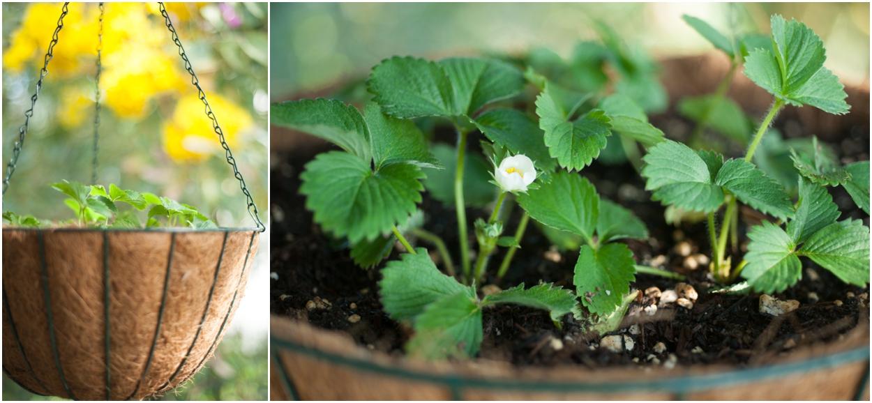 Kihei Veggie Gardening