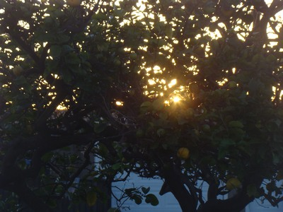 Sunrise through the lemon tree in my own backyard.  Today is new job  day.   Remember that the best relationship is one in which your love for each other exceeds your need for each other .   ..Dalai Lama