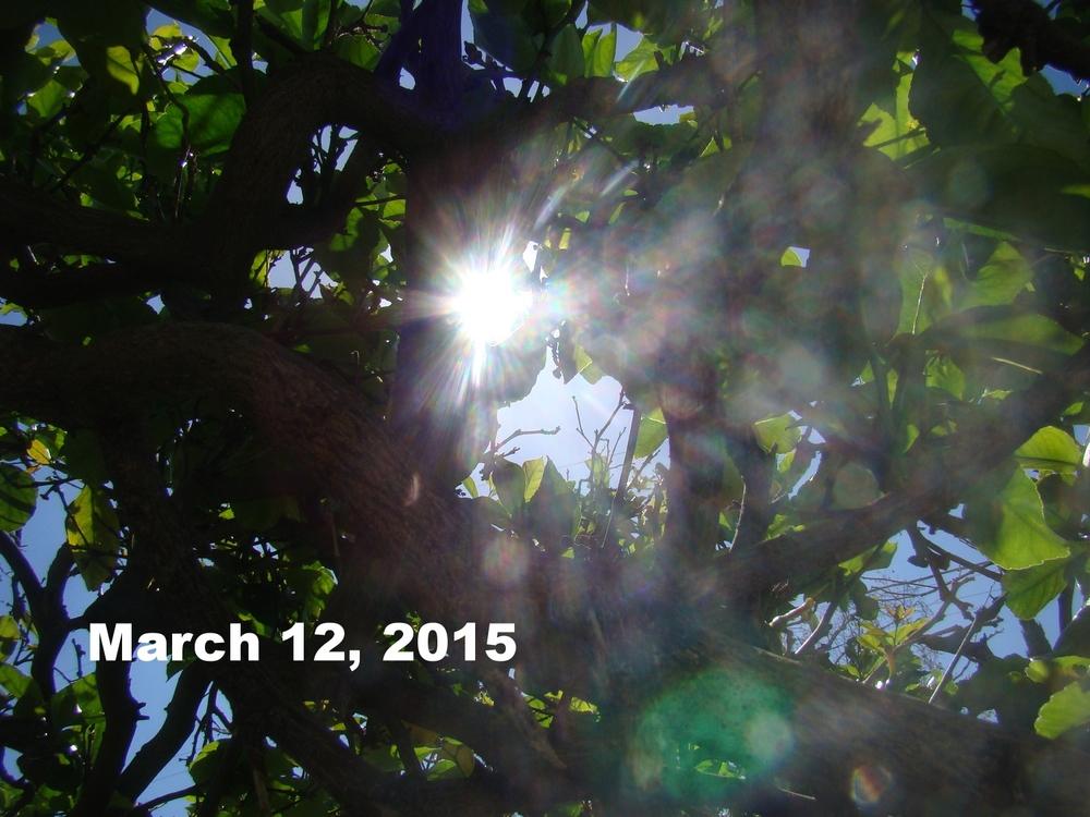 Mar1215_laca_2.JPG