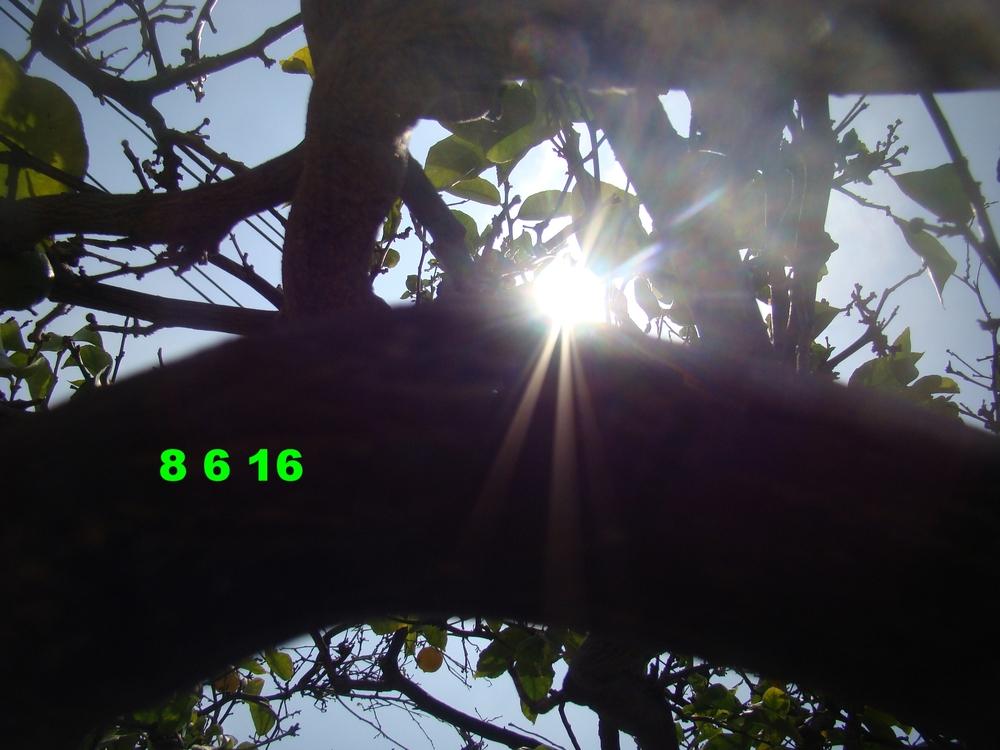 Aug0616_laca_3.JPG