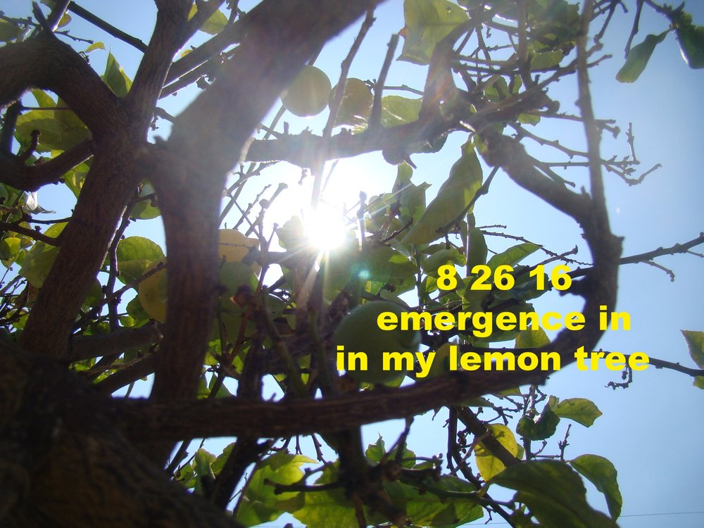 Aug2616_laca_2.JPG
