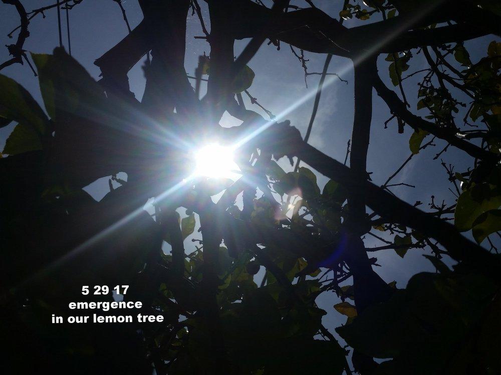May2917_laca_2.jpg