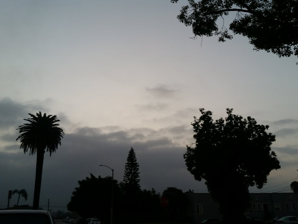 Followed by emergence in Playa Vista