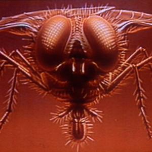 The Fly (David Cronenberg, 1986)