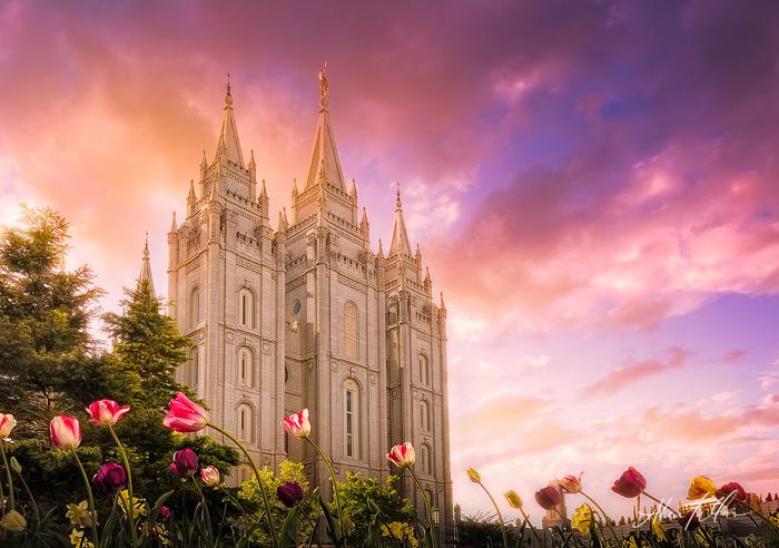 Salt Lake City Pink Tulip Sunset