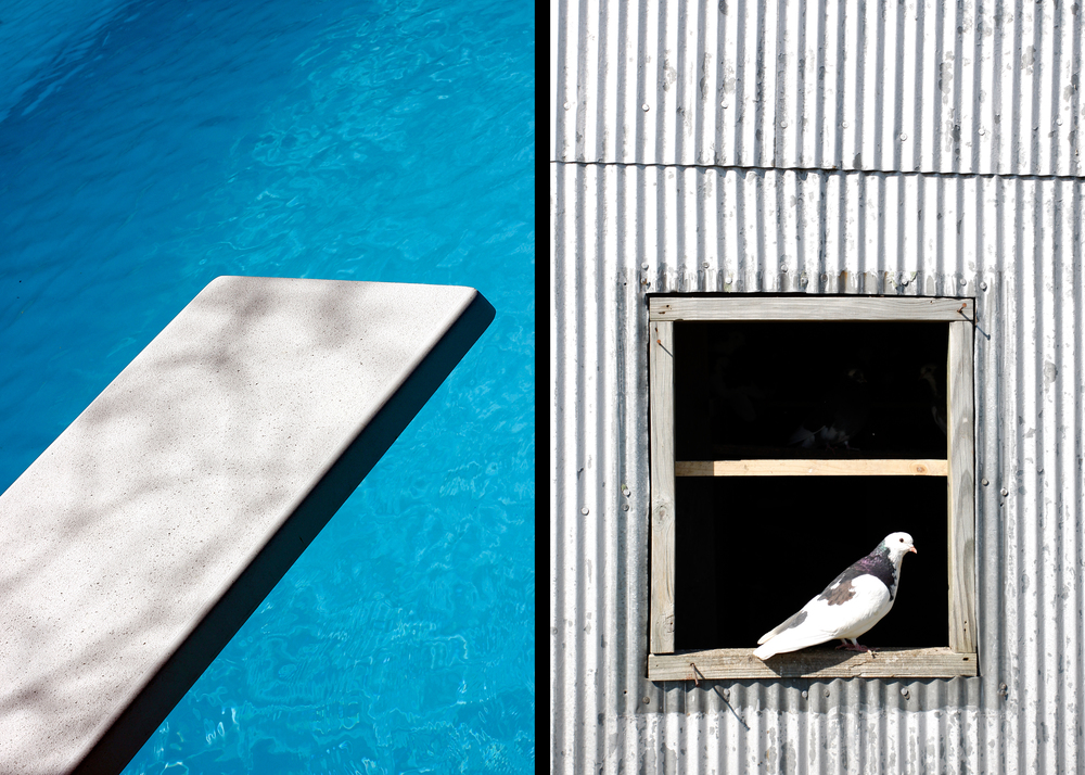 Pool and Pigeon