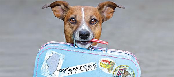 dog_train.jpg