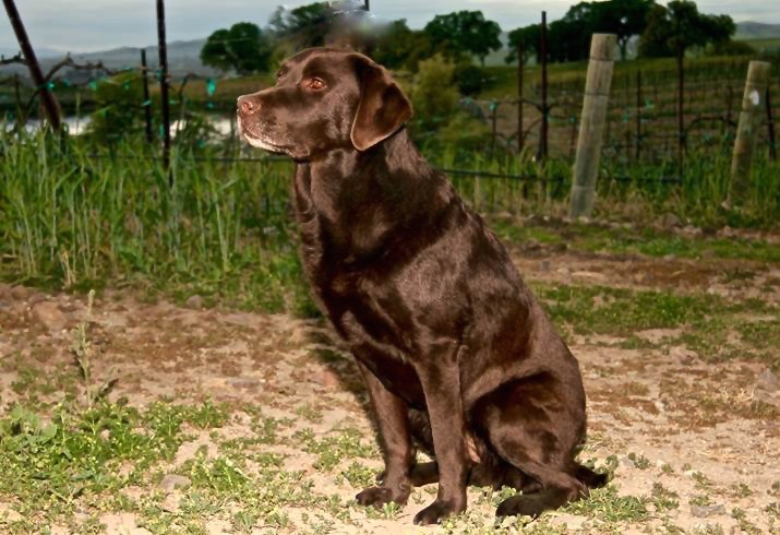 We named her Jetta and she was an incredible AKC Master level Hunting Dog. She had the ideal traits for becoming a champion. She loved treats and she loved people, the perfect combination.