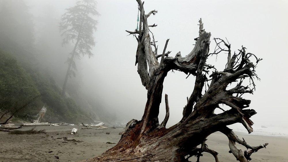 Early morning Oregon coast iPhone.