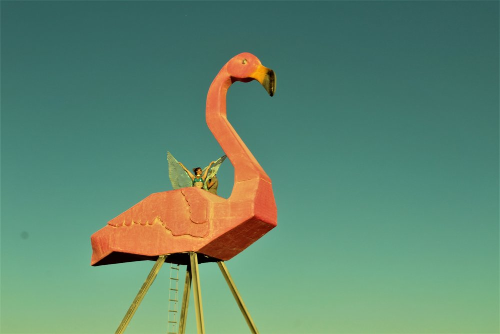 Flamingo11.jpg
