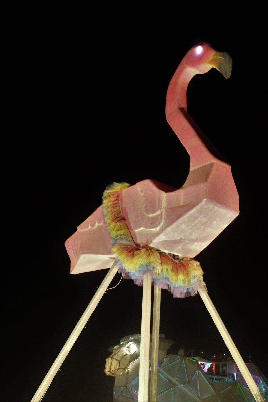 Flamingo13.jpg