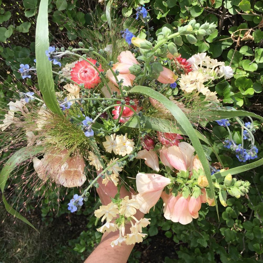Mid-July- cynoglossum, phlox, foxglove, cornflowers, frosted explosion grass,