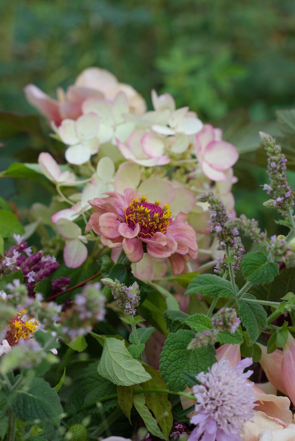 Late August - zinnias, mint, scabiosa, oregano, foxglove, hydrangea, roses