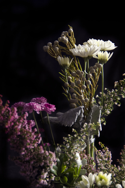 flower2web.jpg