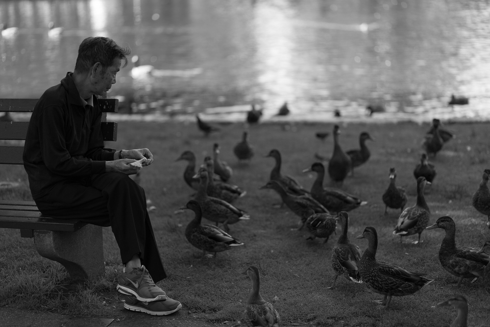man feeding ducks.jpg