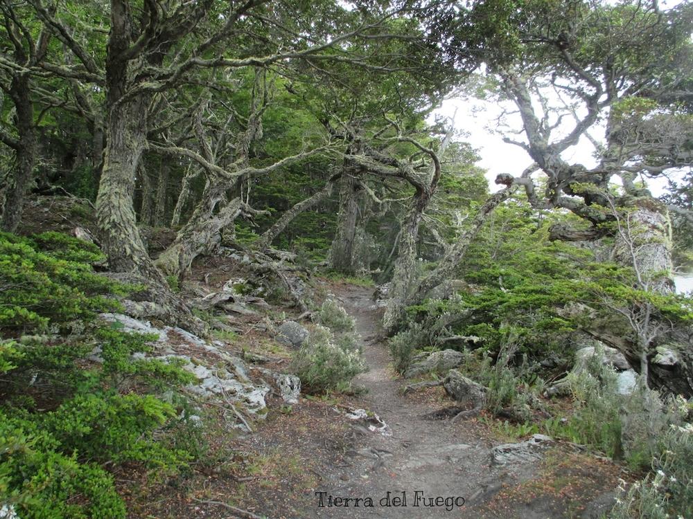 Tierra del Fuego National Park, Argentina.JPG