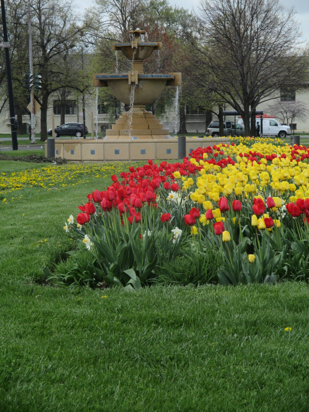 fountain gage park tulips.jpg