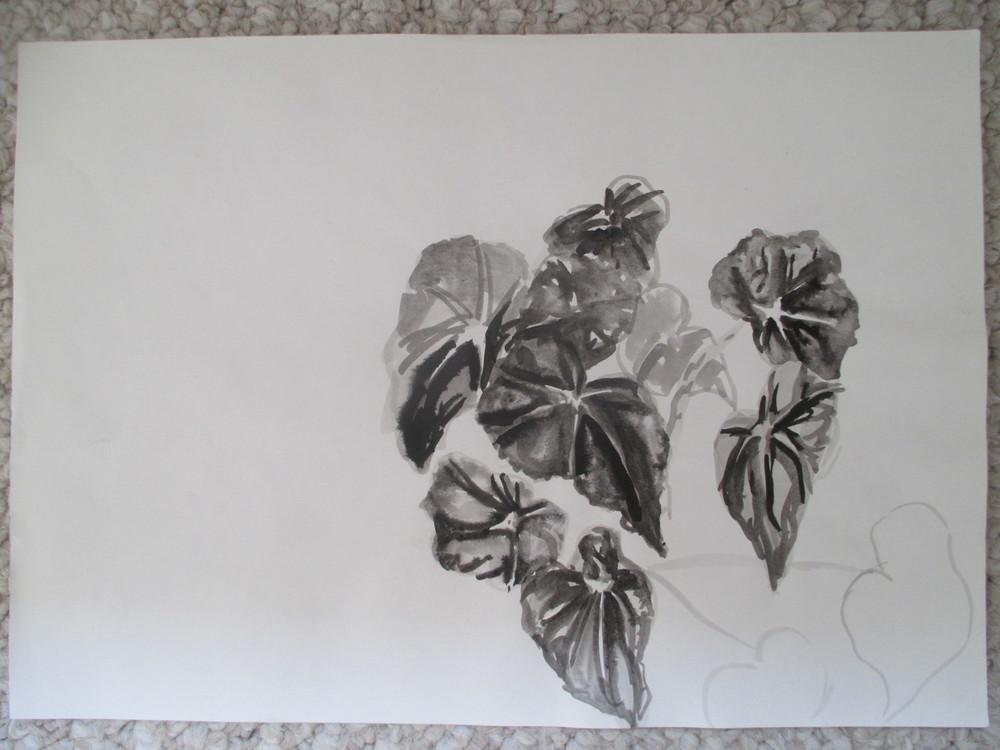 botannical ink study 2001-2005.jpg