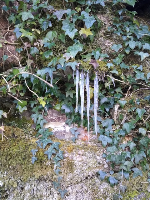Ice on Ivy, Ludlow England