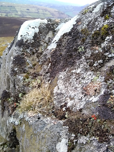 Lichen on Sugarloaf Mountain