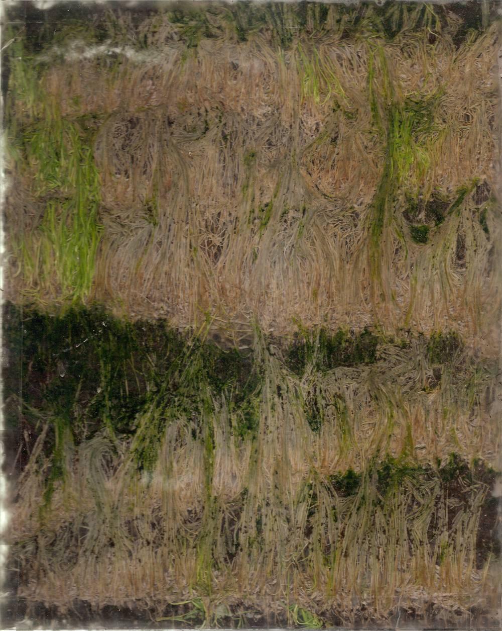 Plexiglass, Grass Seed, Soil  2013