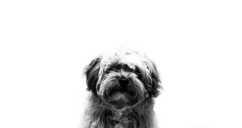 rigby-the-dog-unimpressed