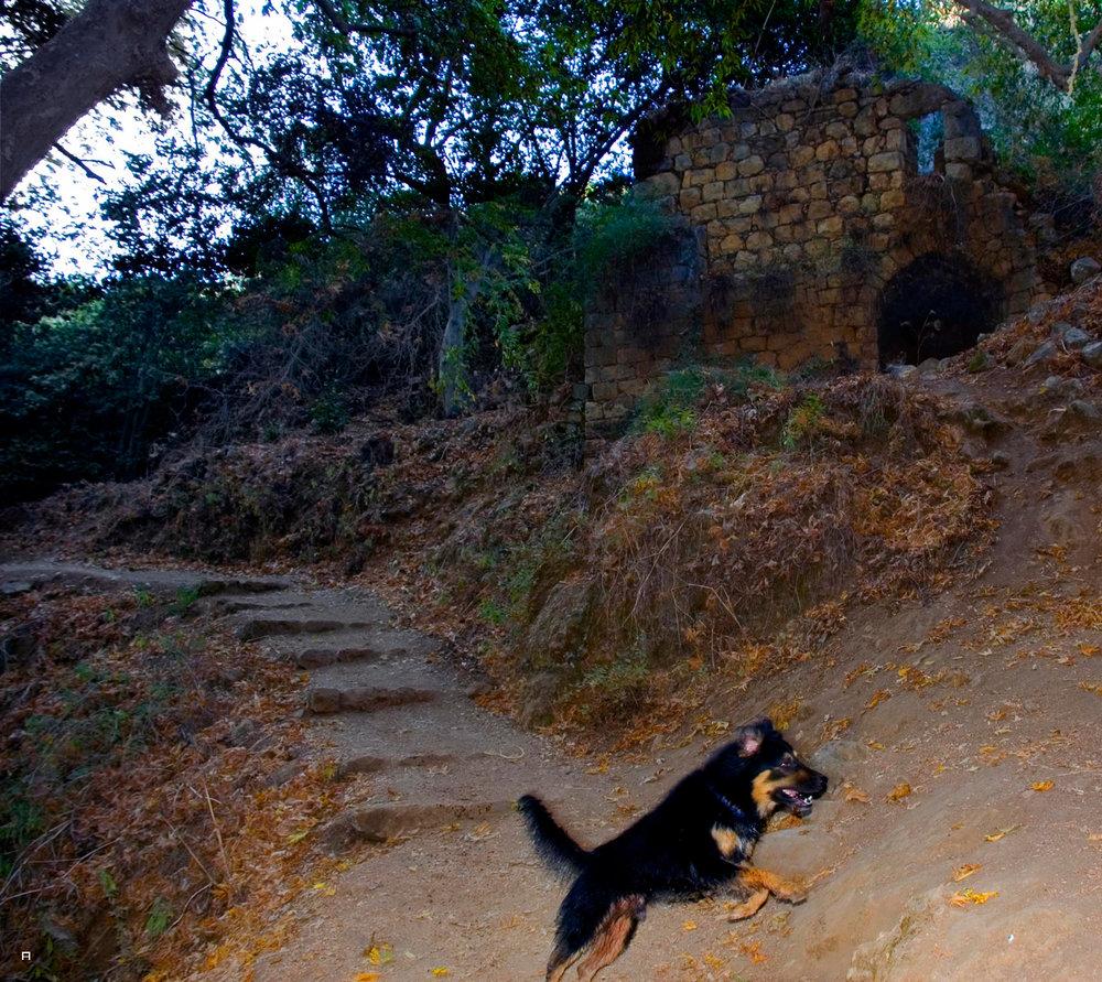 כלב ובית01.jpg
